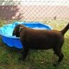 Auf diesem Foto staunt unser Benny über den riesengroßen Wassernapf ;)