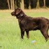 Hier sieht man unseren kleinen Benny, der nun langsam schon ein großer Hund wird, auf der nahen Waldwiese stehen. ( Bitte auf's Bild klicken! )
