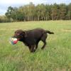 Benny unser Ball-Junkie!