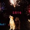 Gute Wünsche 2014
