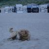 Dennoch schaut unser Sand-Bobby, nach dem Schwimmen, in diesem Licht wie ein Hunde-Gespenst aus...