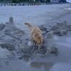 Der Besuch einer Sandburg ist zu dieser Tageszeit viiieel interssanter...