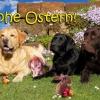 Bobby, Benny und Easy grüßen alle Besucher des Bilder-Blogs