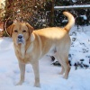 Außerdem frißt er schon wieder Schnee!