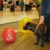 Bei einer kurzen Rast in der Sitzecke auf der Galerie fallen von oben zwei Luftballons herunter....