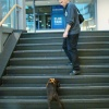 Ach nein! Große Treppe - kleiner Hund.