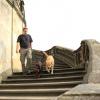 Frauchen hat erzählt, dass auf dieser Treppe das Aschenbrödel seinen silbernen Tanzschuh verloren hat...