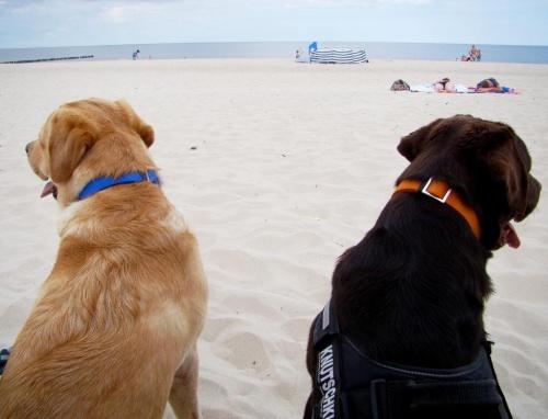 Sie träumen davon am nächsten Tag wieder an den Strand zu gehen -