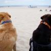 Ein Tag am Hundestrand- Juni 2013